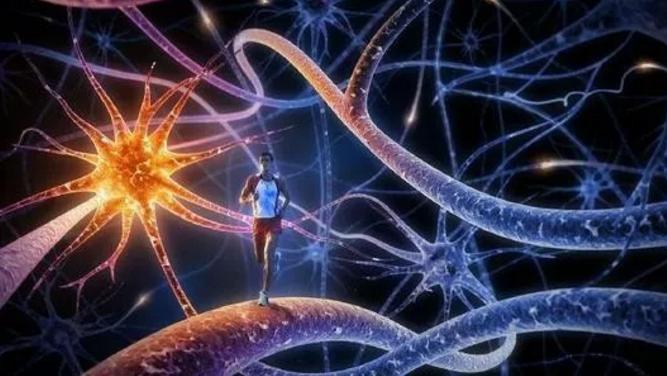 生物活性肽与神经系统.png