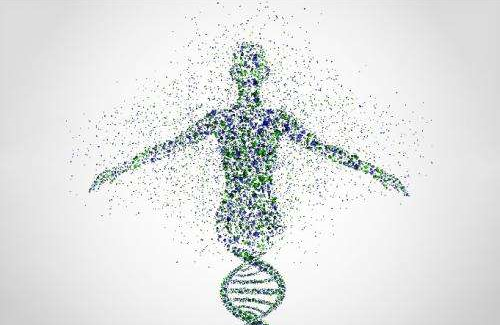 苦瓜多肽的类胰岛素作用,对人体代谢功能的调节意义重大