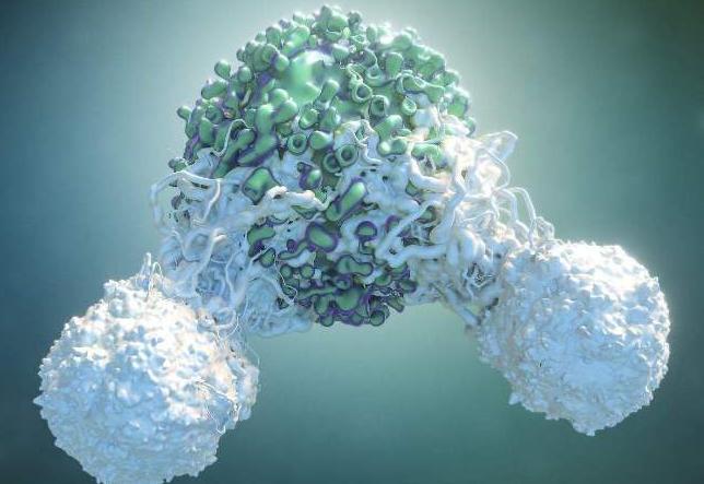 肽对免疫细胞的影响.png