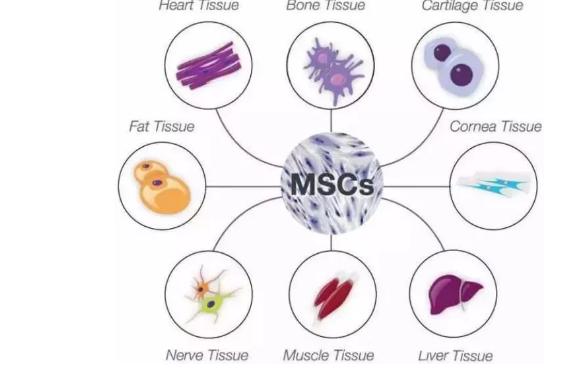 干细胞注射能够治疗糖尿病吗.png